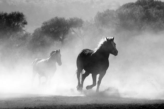 水の上を走る馬たち